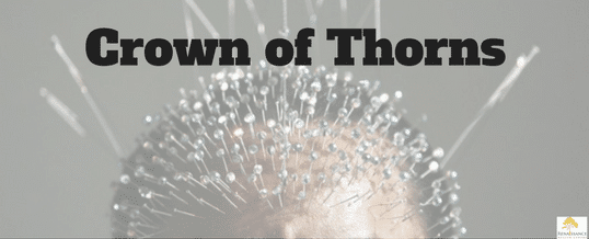Crown of Thorns for Traumatic Brain Injury